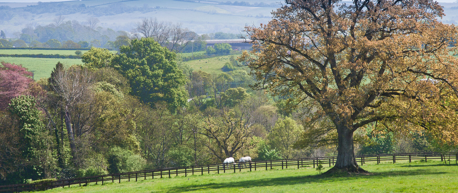 Rural Property in the Cranborne Chase
