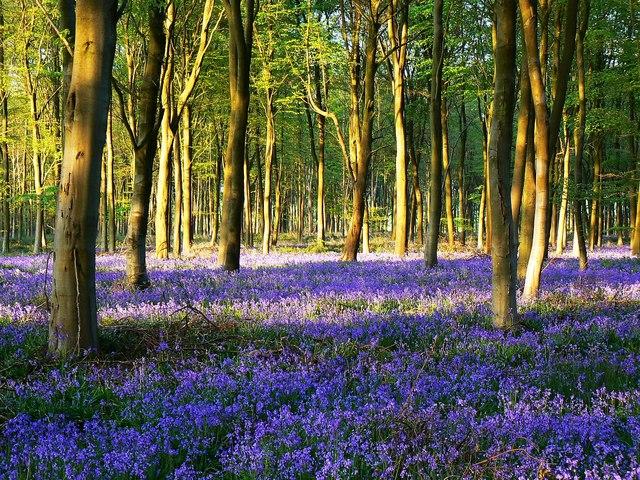 Spring Wiltshire